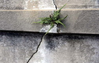 Crack with plant growing in it