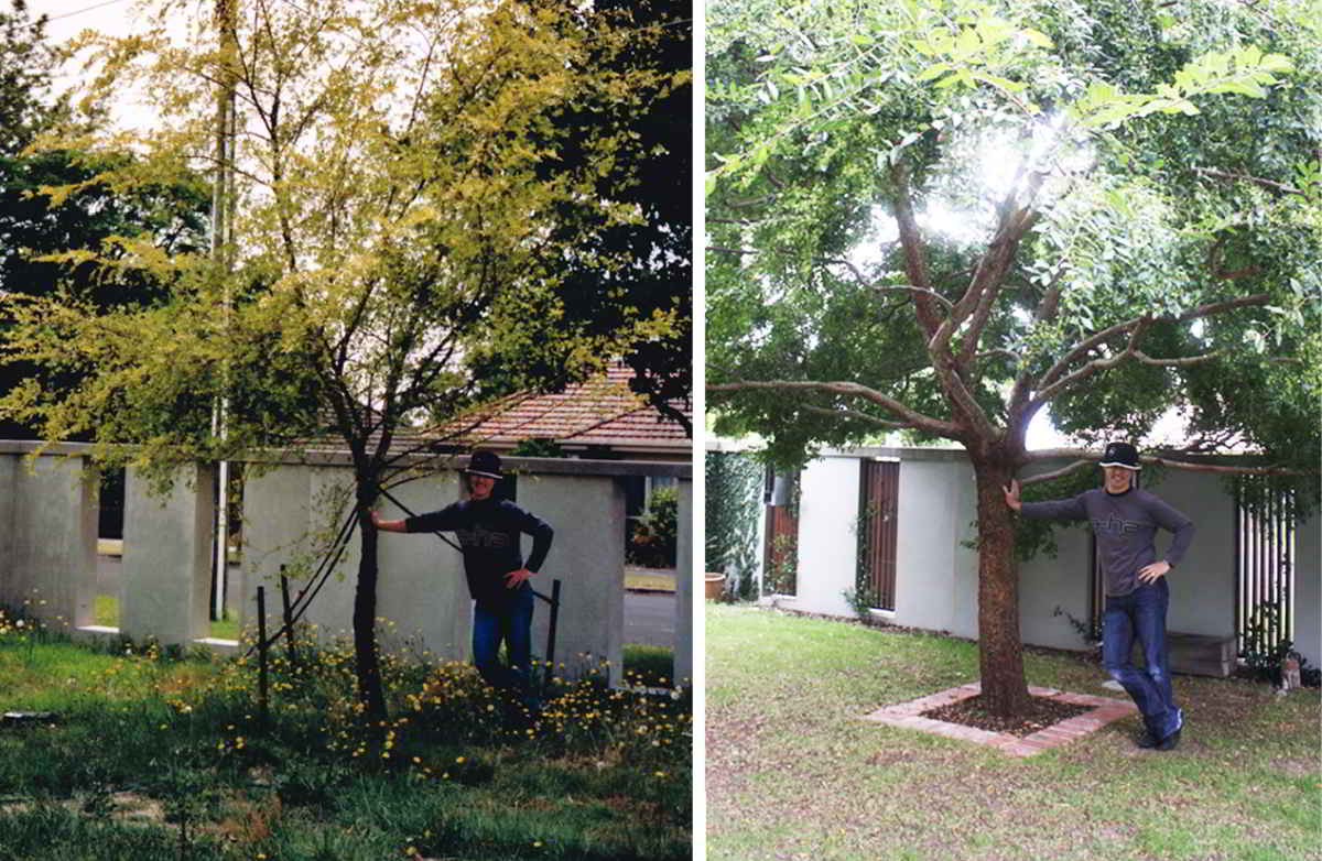 Taras and tree 2002 then 2012