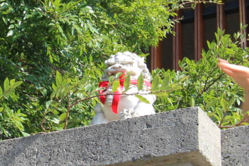 Foo dog with new red ribbon