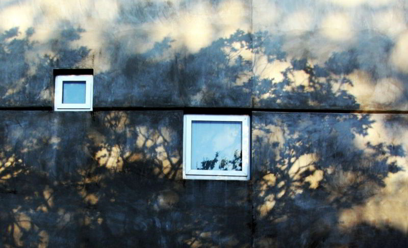 Shadows of trees on the wall